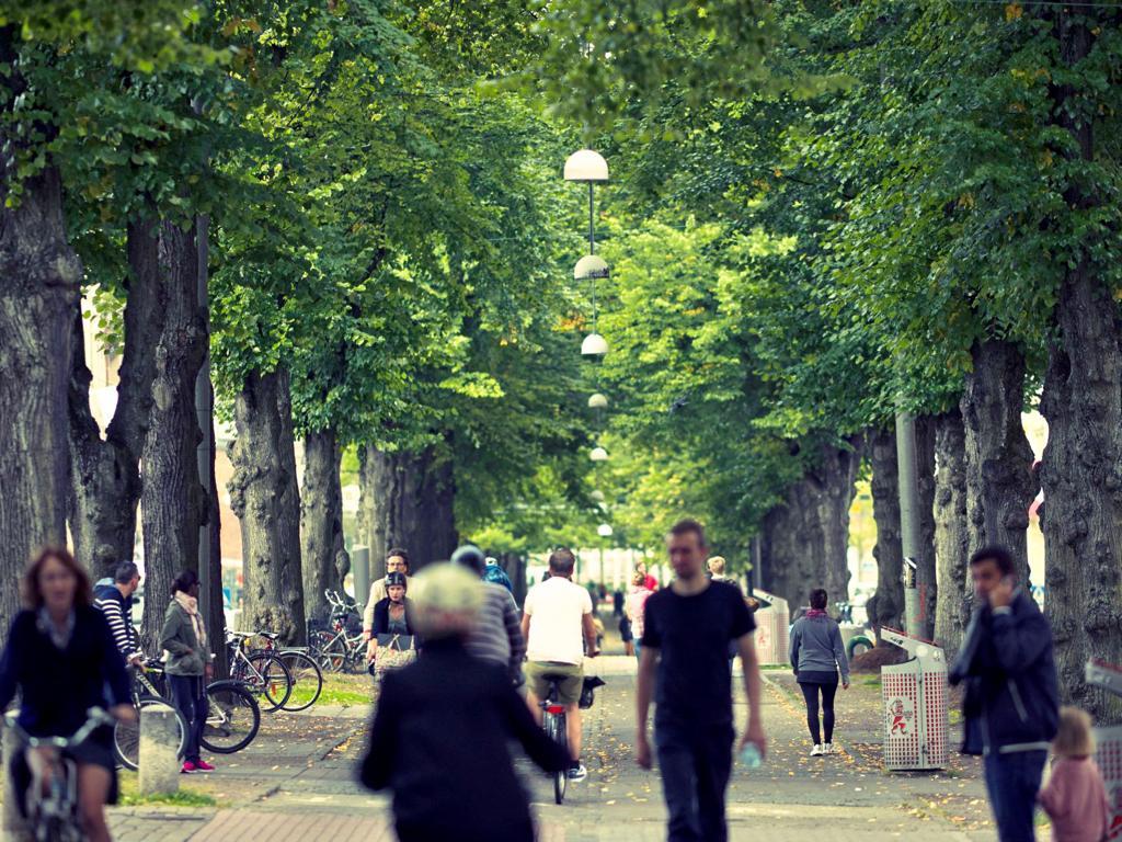 EsionX - Tree-lined avenue